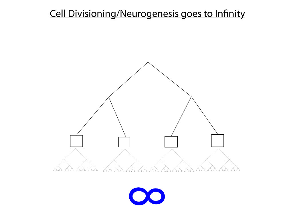 4dg Cell-Divisioning-to-Infinityi.jpg
