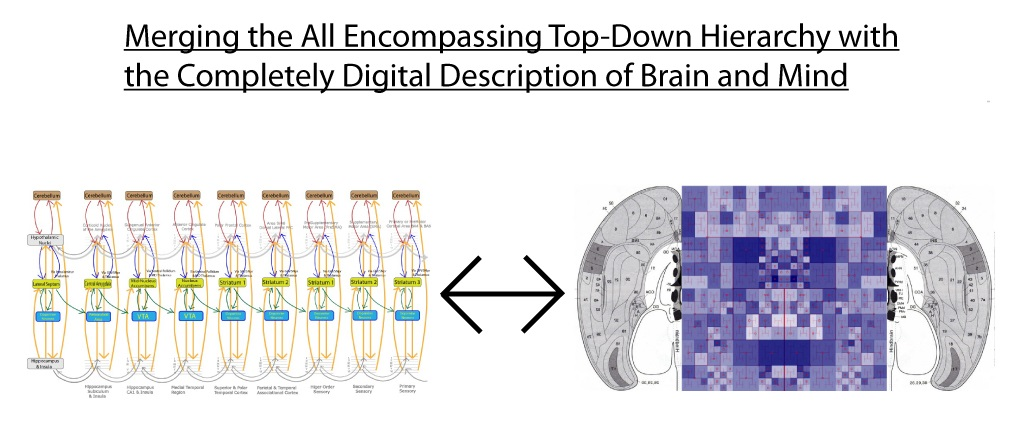Cropped - Hierarchy-into-digitized-brain.jpg