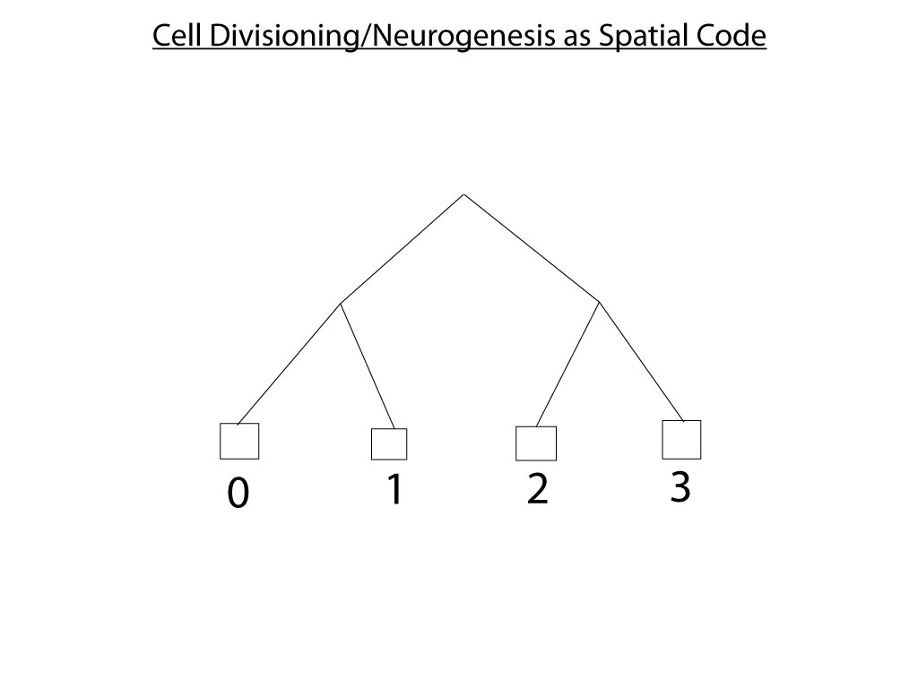 4df Cell-Divisioning-Binary-Tree1.jpg