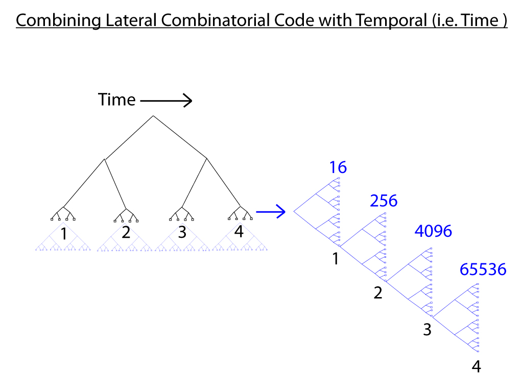 4dj Combining-Spatial-with-Temporal-Code.jpg