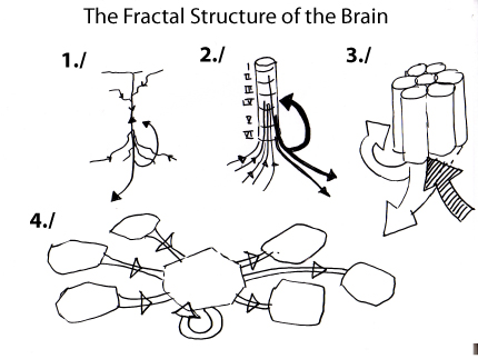 Diagram showing the Fractal Structure of the Cerebral Cortex